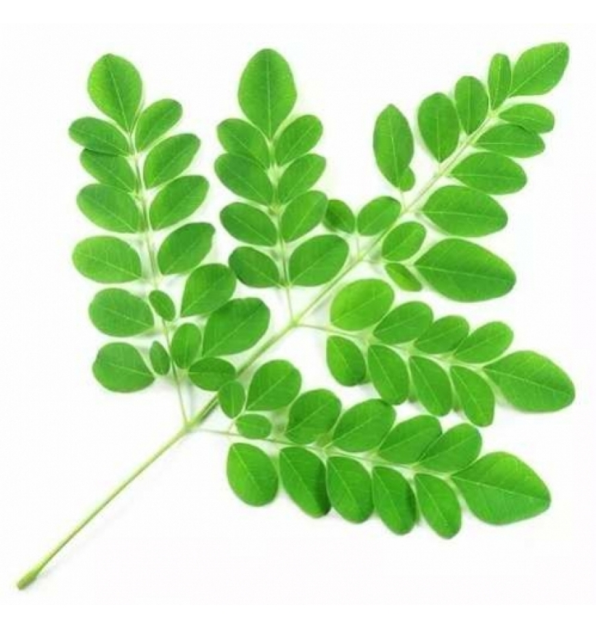 Moringa Oleifera Em Pó 1...